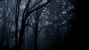 Alan Wake Bright Falls Akt.1 - wersja PL