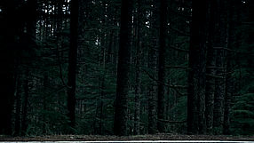 Alan Wake Bright Falls Akt.5 - wersja PL