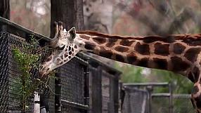 Zoo Tycoon dziennik dewelopera #2