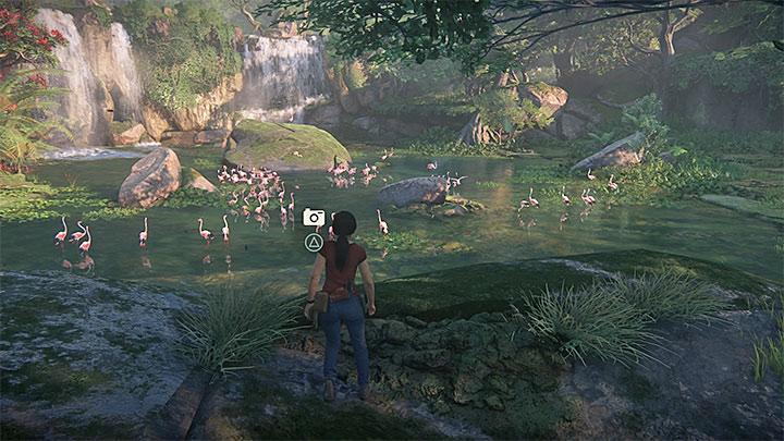 Jeepa zatrzymaj po dotarciu do pokazanego na powyższym obrazku zbiornika wodnego gdzie natrafisz na dużą grupę flamingów - 3 - Powrót do korzeni | Opis przejścia - Uncharted: Zaginione Dziedzictwo - poradnik do gry