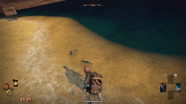 Aby łowić ryby, podejdź do miejsca, w którym zauważysz pływające ryby. - Łowienie ryb - Jak zdobyć Fishing Harpoon w Outward? - Outward - poradnik do gry