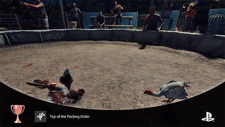 Как разблокировать: выиграть петушиный бой - Far Cry 6: трофеи / достижения - список - руководство по игре Far Cry 6