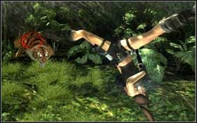 Pobiegnij w prawo przygotowując się jednocześnie na walkę z trzema wybiegającymi z dżungli tygrysami - Coastal Thailand - Remnants (cz.2) - Solucja - Tomb Raider: Underworld - poradnik do gry