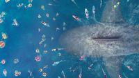 Wielki rekin i Jason Statham rozbili bank - weekendowy Box Office