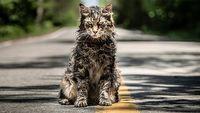 Pet Sematary – zwiastun nowej adaptacji Smêtarza dla zwierzaków