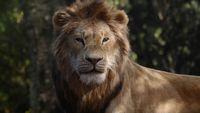 Król Lew wci¹¿ na czele Box Office, Pewnego razu w Hollywood z udanym debiutem